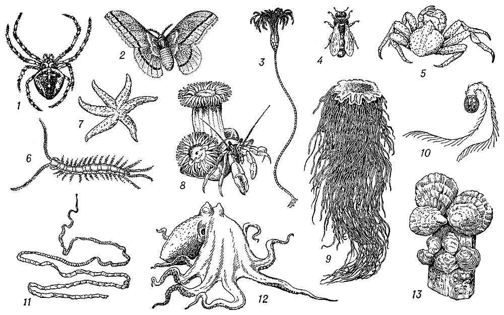Красная пиранья питается рыбой, а также насекомыми, червями и другими беспозвоночными