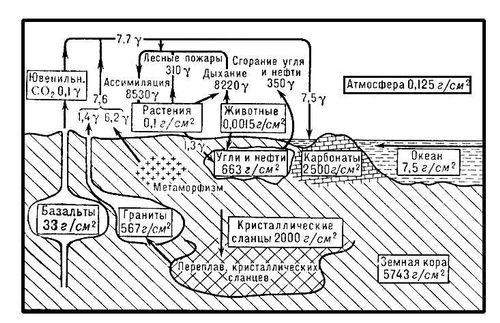 Схема круговорота углерода.