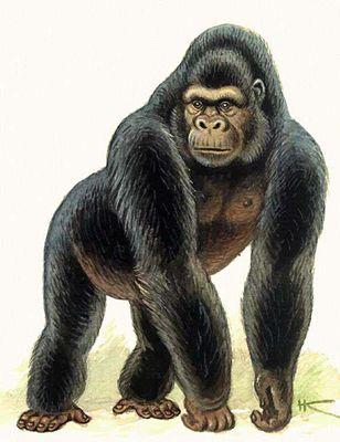 Опыты по скрещиванию человека с обезьяной.