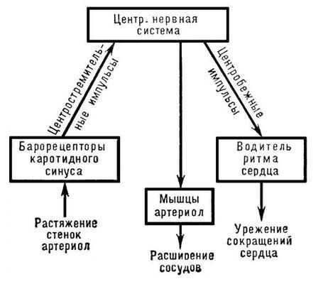 Механизм регуляции