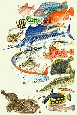 Нерест и жор щуки полезные статьи о рыбалке все для
