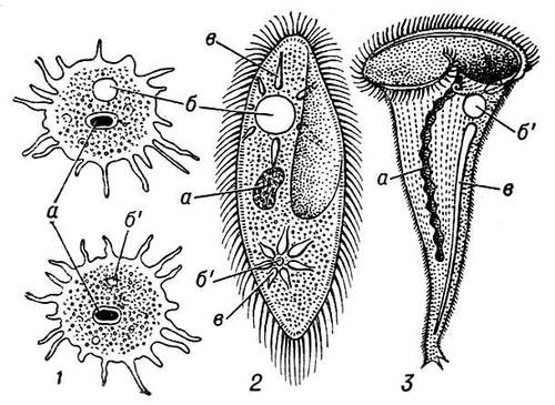 Hogyan lehet prosztatagyulladást kezelni vákuumszivattyúval